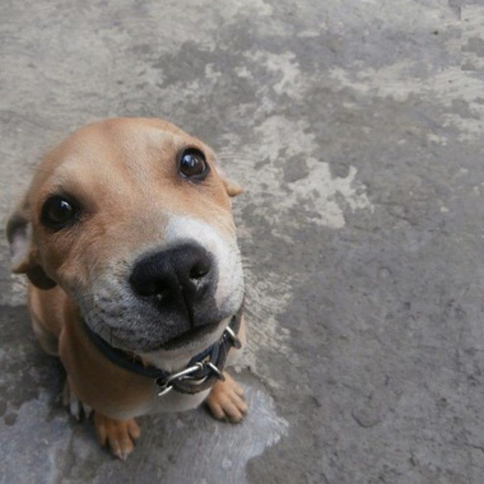dog-141270_640